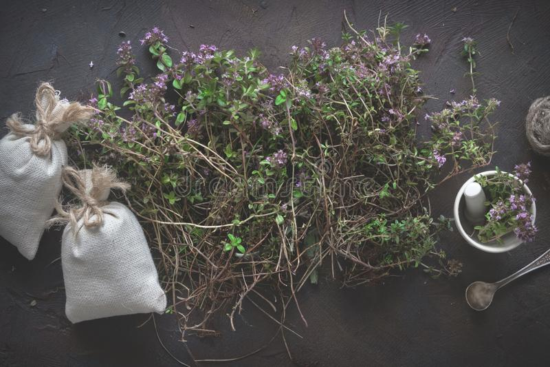 麝香草花、灰浆和香囊有很多胸腺serpyllum医药草本 免版税库存图片