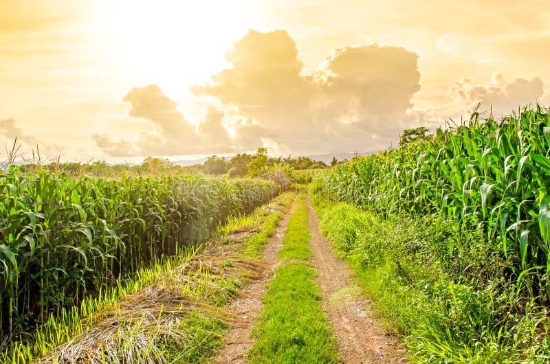 麦地和地方路风景  免版税库存图片