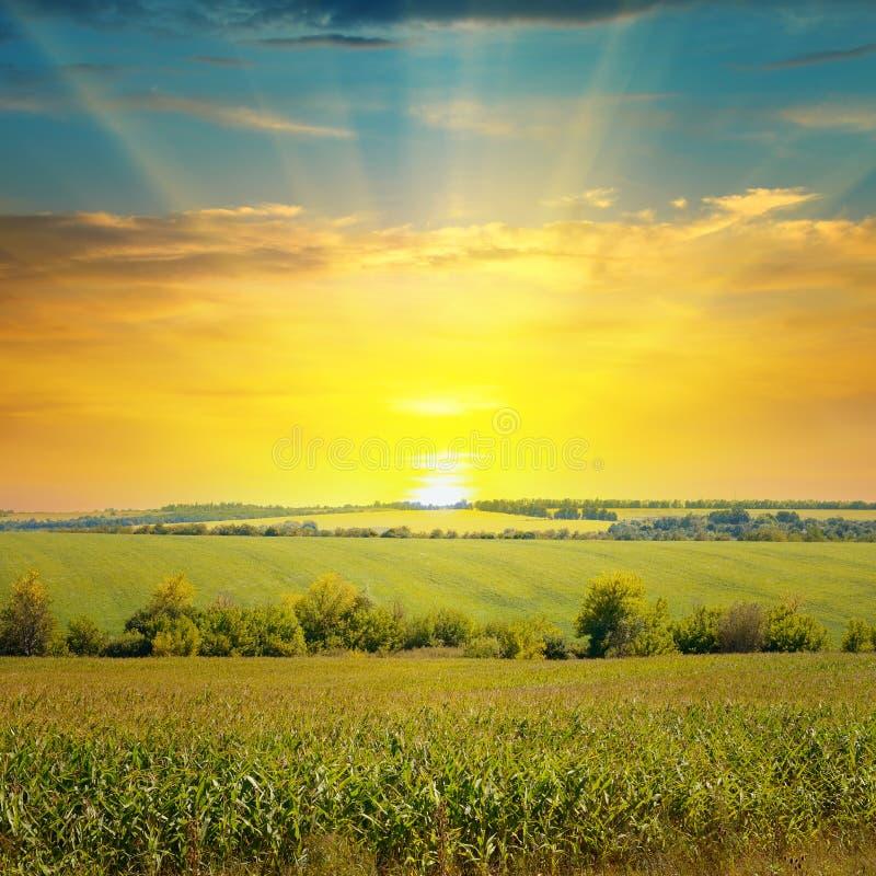 麦地和日出在天空 库存图片