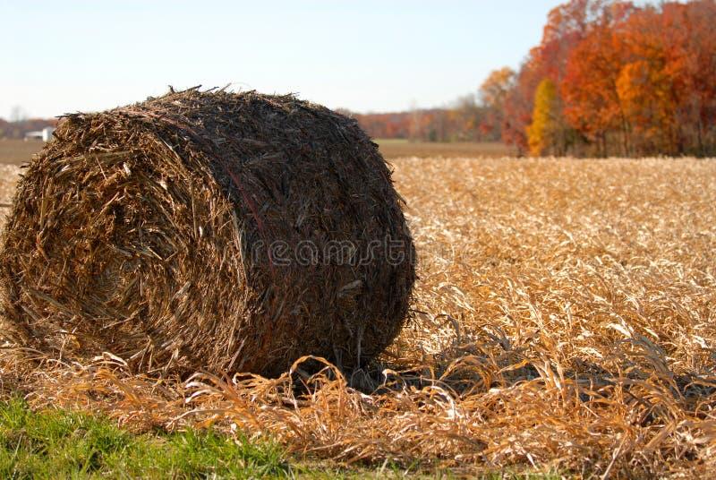 麦地收获农村干草的卷 免版税库存图片