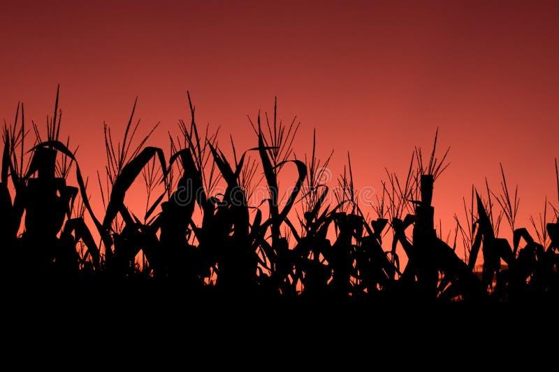 麦地红色天空日落 库存图片