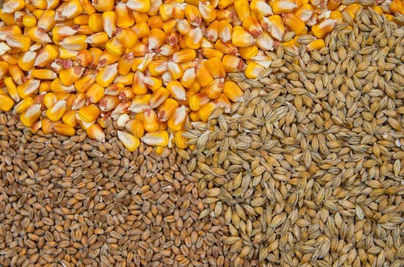 麦子、大麦和玉米 免版税图库摄影