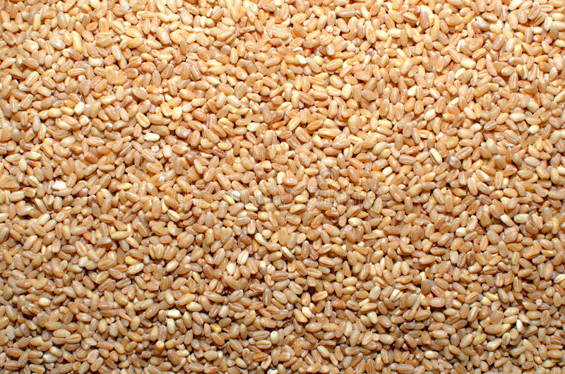 麦子五谷种子 免版税库存图片