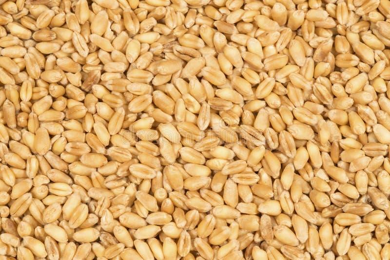 麦子五谷 库存图片