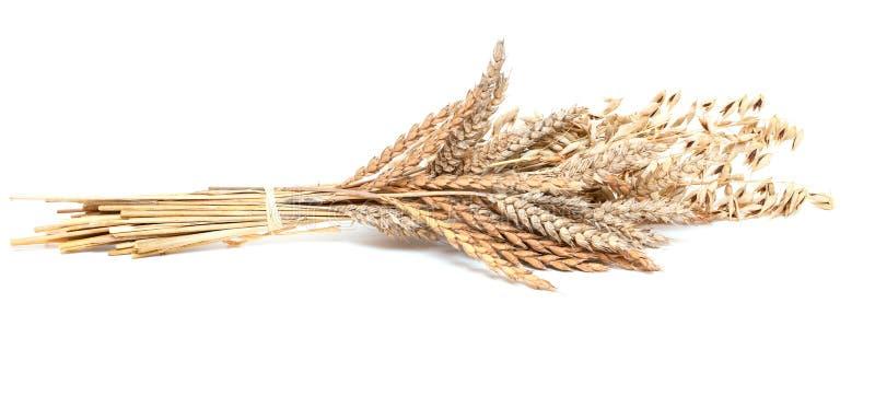 麦子和大麦在白色 库存照片