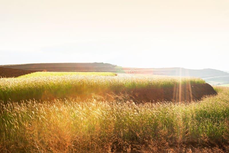 麦子在冬天黄昏的柔和大阳台领域,太阳光芒在领域,农村场面发光下来在云南,中国 免版税图库摄影