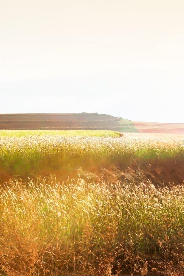 麦子在冬天黄昏的柔和大阳台领域,太阳光芒在领域,农村场面发光下来在云南,中国 免版税库存图片
