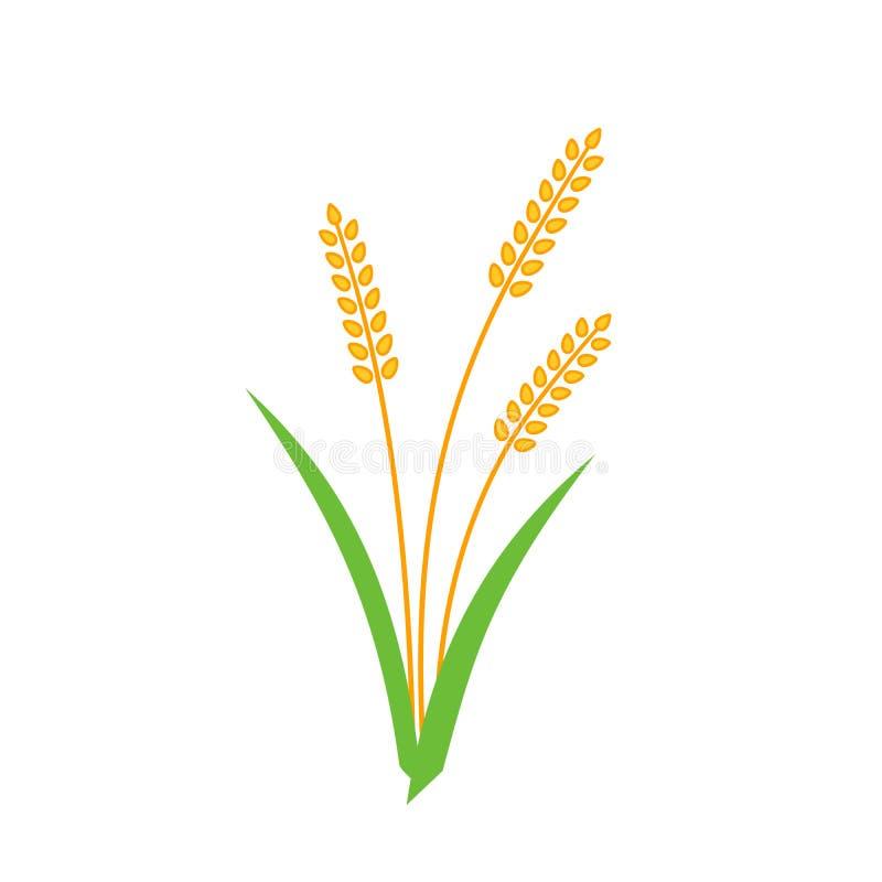麦子大麦在白色背景隔绝的钉黄色 皇族释放例证