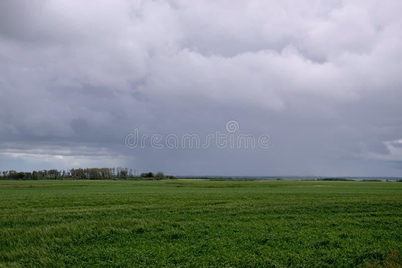 麦子播种在云层,萨斯喀彻温省,加拿大下 图库摄影