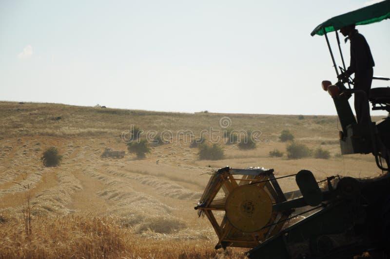 麦子收获在安纳托利亚夏天 免版税库存图片