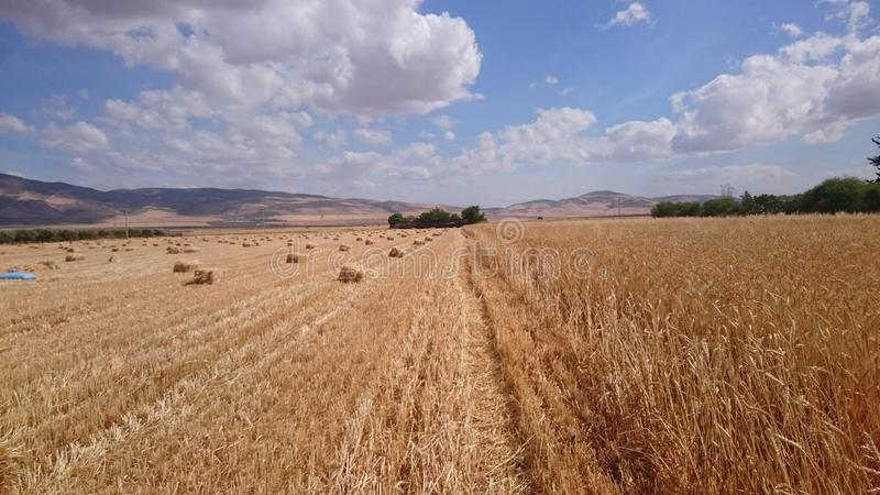 麦子收获天 免版税库存照片