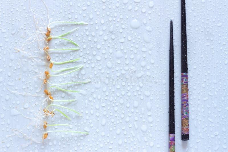 麦子新芽和日本筷子行  轻的背景 库存照片