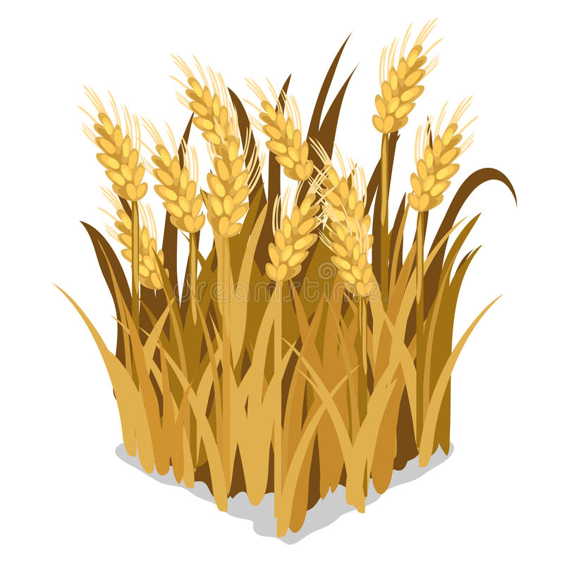 麦子的种植和耕种 被隔绝的传染媒介 向量例证