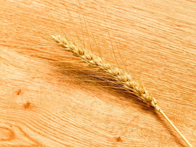 麦子的耳朵在木背景的 库存图片