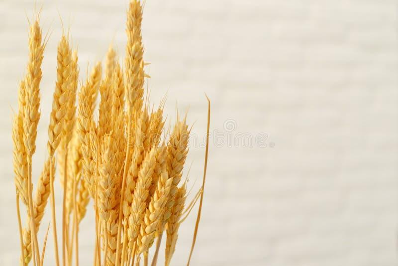 麦子的耳朵在白色背景的  免版税库存照片
