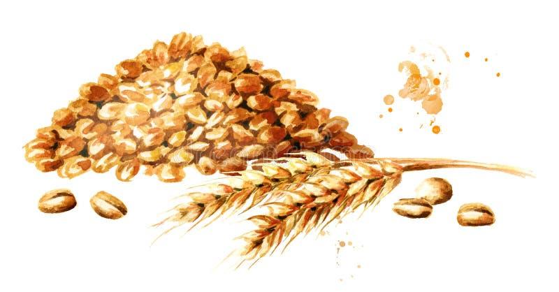 麦子耳朵和一束五谷 水彩手拉的例证,隔绝在白色背景 向量例证