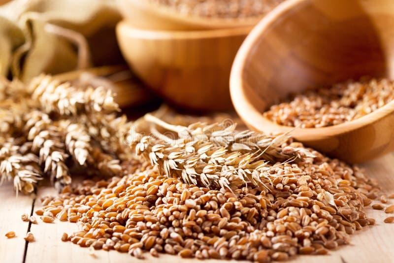 麦子耳朵和谷物 免版税库存图片