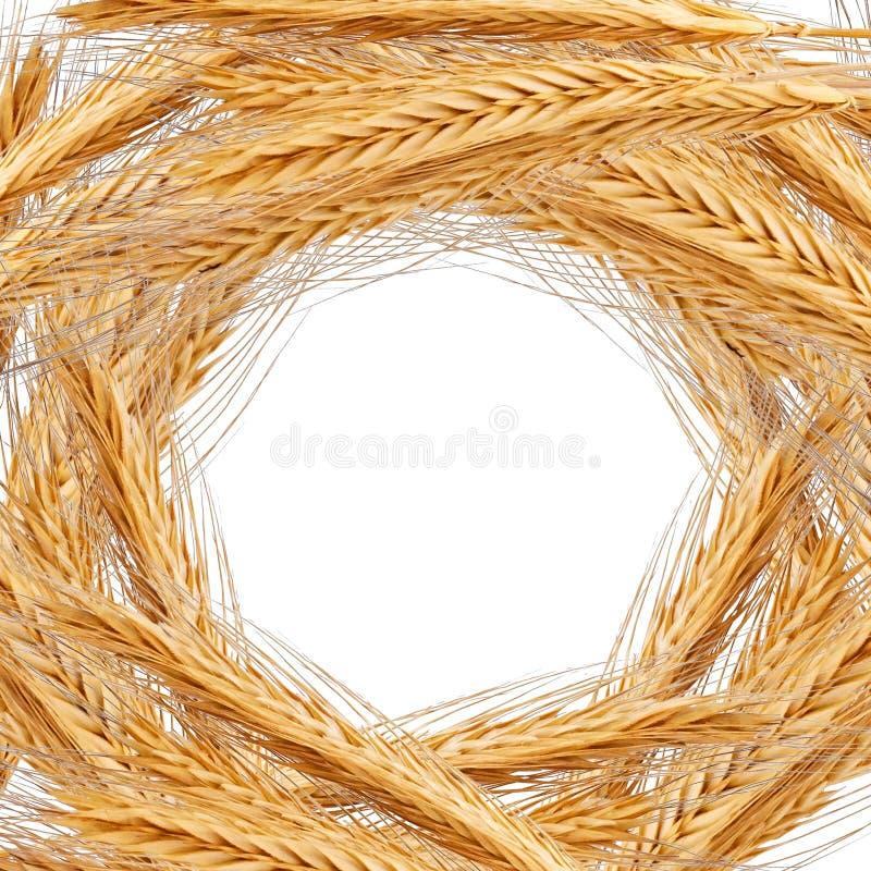 麦子背景 免版税图库摄影