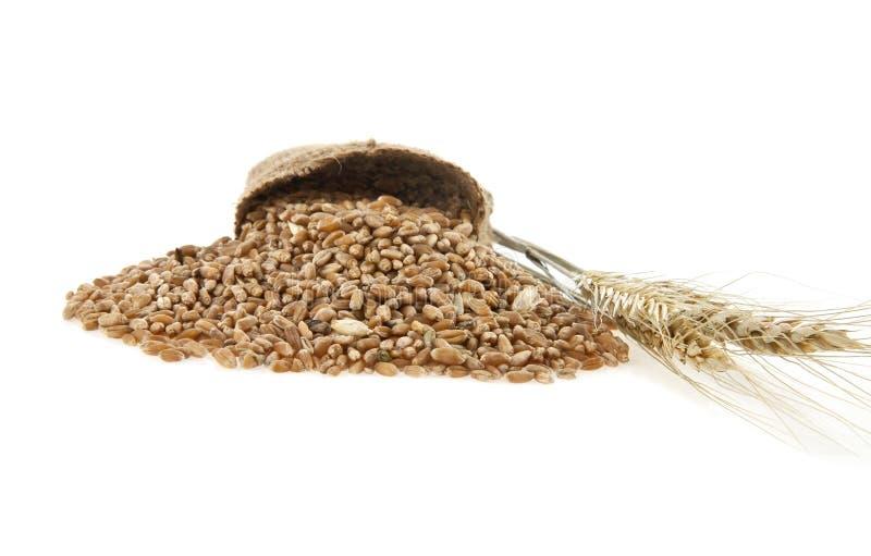 麦子谷物 库存照片