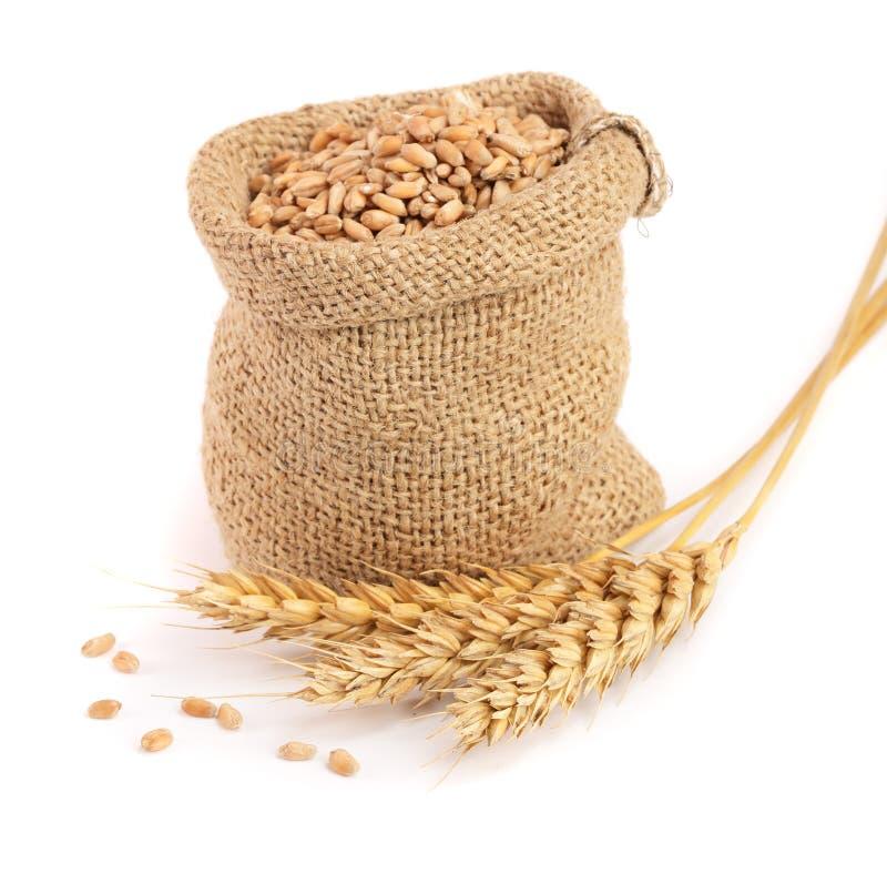 麦子钉和麦子五谷在白色背景隔绝的粗麻布袋 库存图片