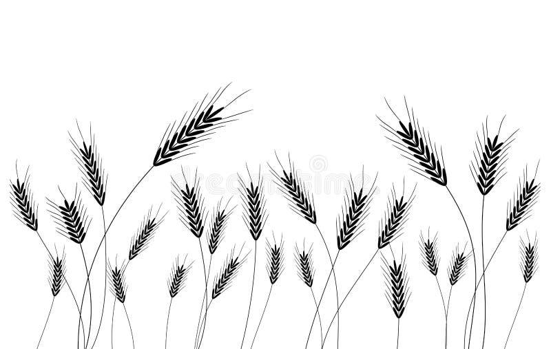 麦子 向量例证