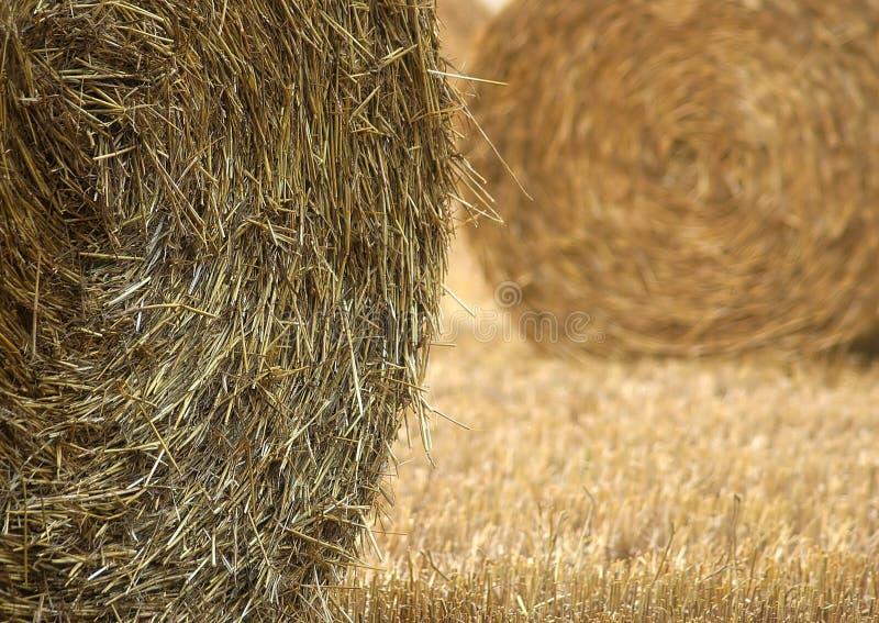 Download 麦子 库存照片. 图片 包括有 金黄, 农夫, 庄稼, 感恩, 收获, 农场, 麦子 - 190128
