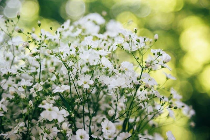 麦小的白花在绿色和黄色bokeh背景,好日子的 花 库存照片