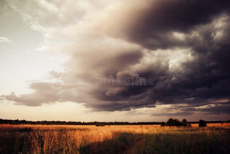 麦田在与黑暗的云彩的剧烈的天空,接近的雷暴,夏天风景下 库存图片