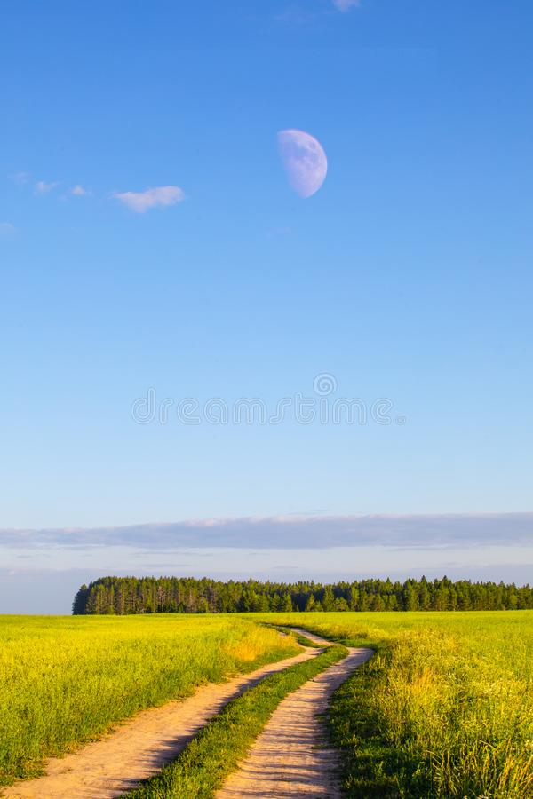 麦田在夏天好日子 收获面包 与草甸和树的农村风景 库存图片