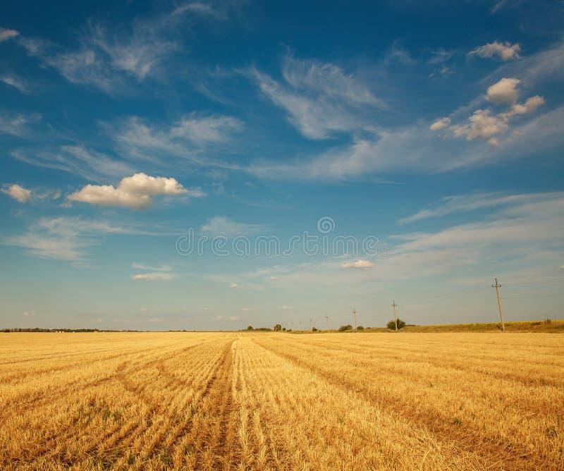 麦田在收获在种田国家的天空蔚蓝和云彩农业背景以后 库存照片