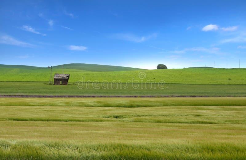 麦田在Palouse, WA 免版税图库摄影