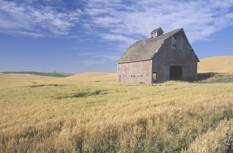 麦田的一个老谷仓 库存照片