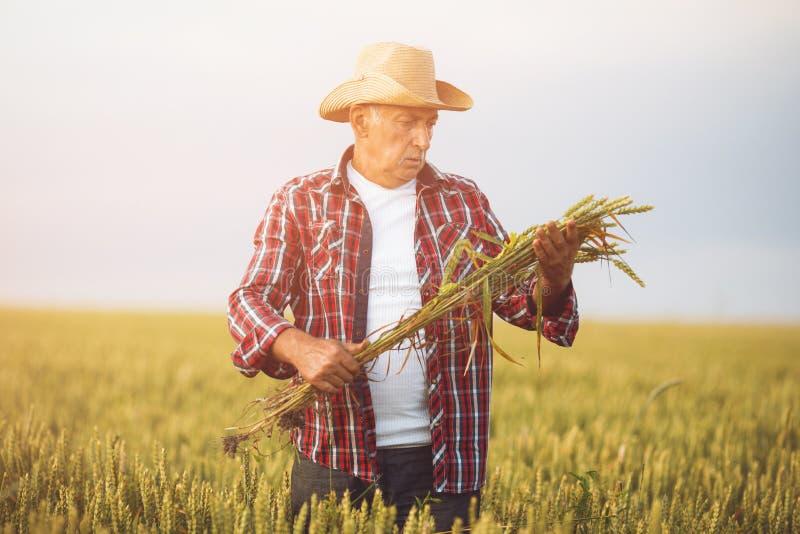 麦田的农夫 E 库存图片