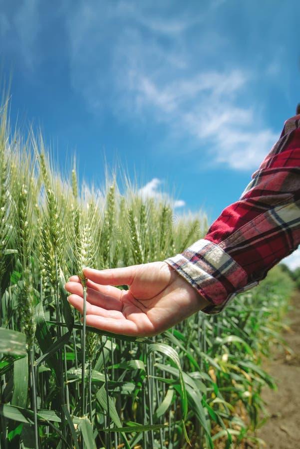 麦田的女性农夫 免版税图库摄影
