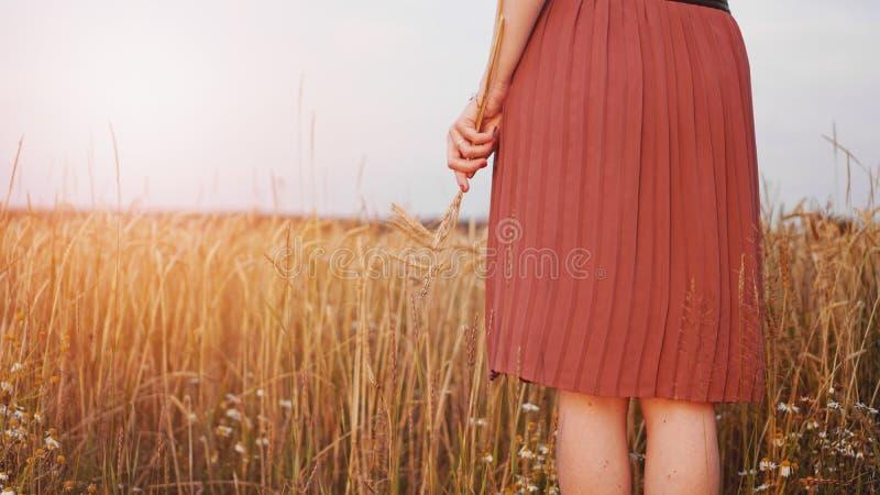 麦田的妇女,妇女在手中握麦子的耳朵 免版税库存图片