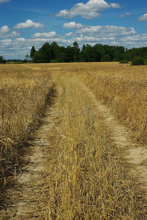 黑麦的领域 免版税库存图片
