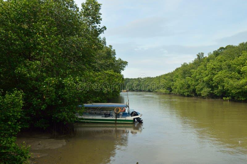 麻塘美洲红树森林储备 库存图片