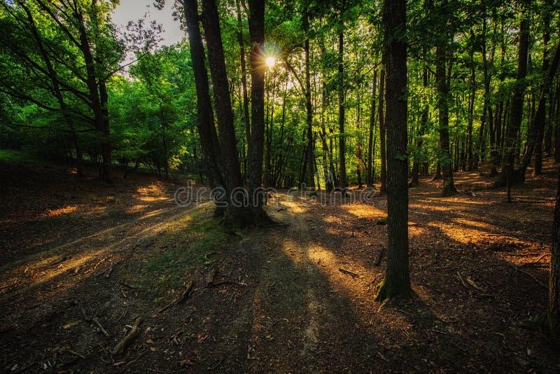 黄昏在森林里 免版税库存照片