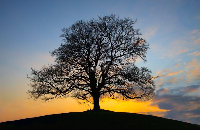 黄昏小山顶层结构树 免版税库存照片
