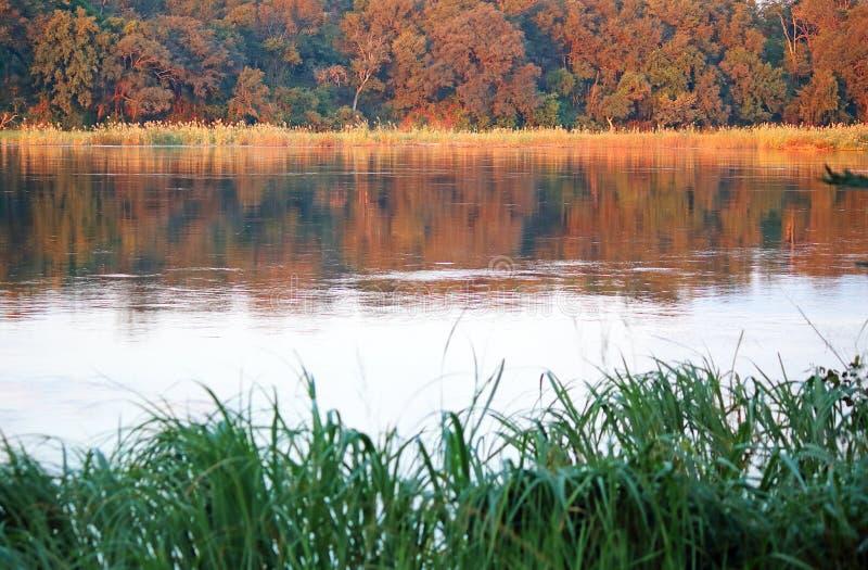 黄昏捉住KAVANGO河的远的边太阳 免版税图库摄影