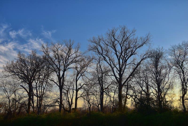 黄昏日落视图通过冬天树枝沿谢尔比底部林荫道路和自然区域坎伯兰河,Na的Opryland 免版税库存图片