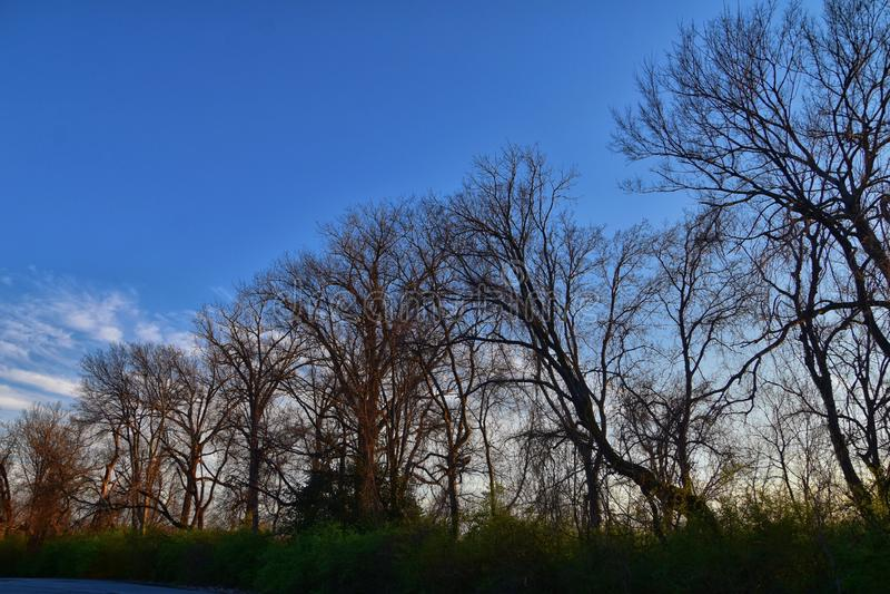 黄昏日落视图通过冬天树枝沿谢尔比底部林荫道路和自然区域坎伯兰河,Na的Opryland 免版税库存照片