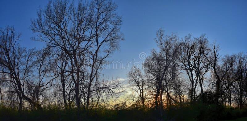 黄昏日落视图通过冬天树枝沿谢尔比底部林荫道路和自然区域坎伯兰河,Na的Opryland 免版税图库摄影