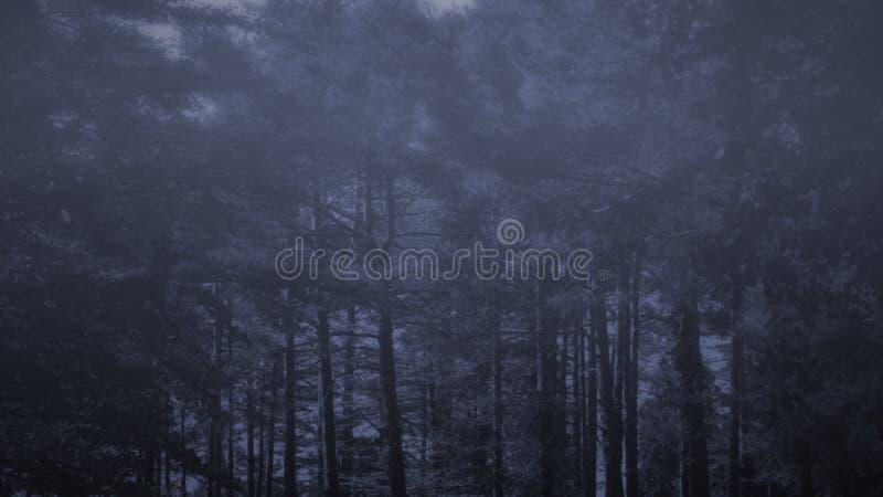 黄昏的有雾的森林 免版税库存图片