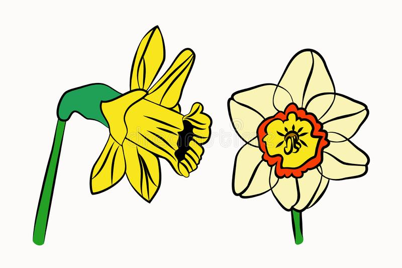 黄水仙集合明亮美丽 向量例证