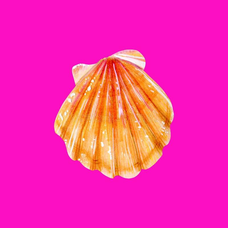 黄海壳扇贝 向量例证