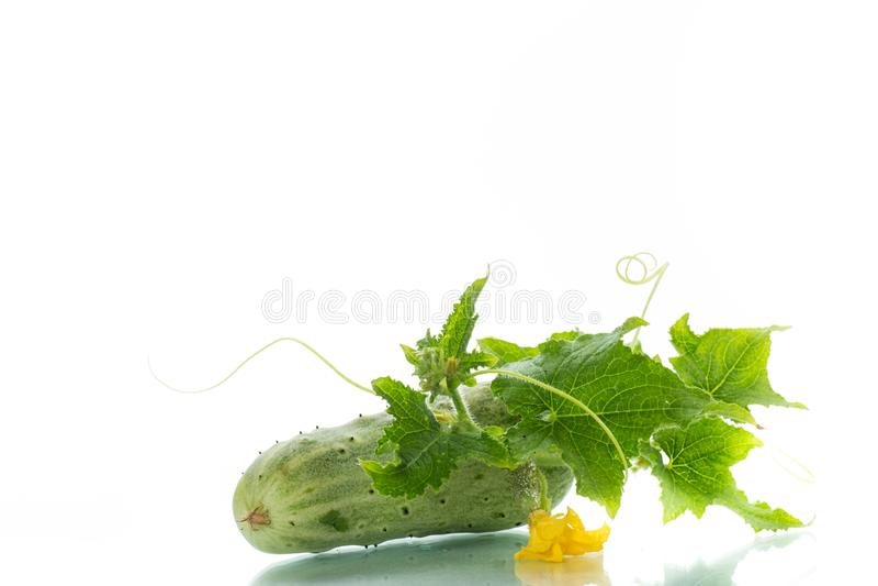 黄瓜新绿色 免版税库存照片