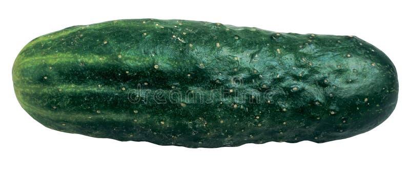 Download 黄瓜 库存图片. 图片 包括有 新鲜, 黄瓜, 绿色, 唯一, 成份, 食物, 蔬菜, 查出, 可口 - 58735