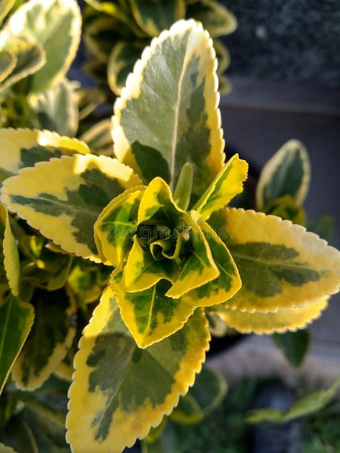 黄绿植物 库存照片