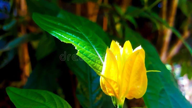 黄绿色花自然点击 库存图片
